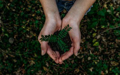 Innovazione sostenibile e responsabile